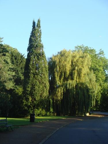 cypress_oak_20121004_1225467874